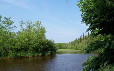 Amnicon Cabins – Perfect for Birders!